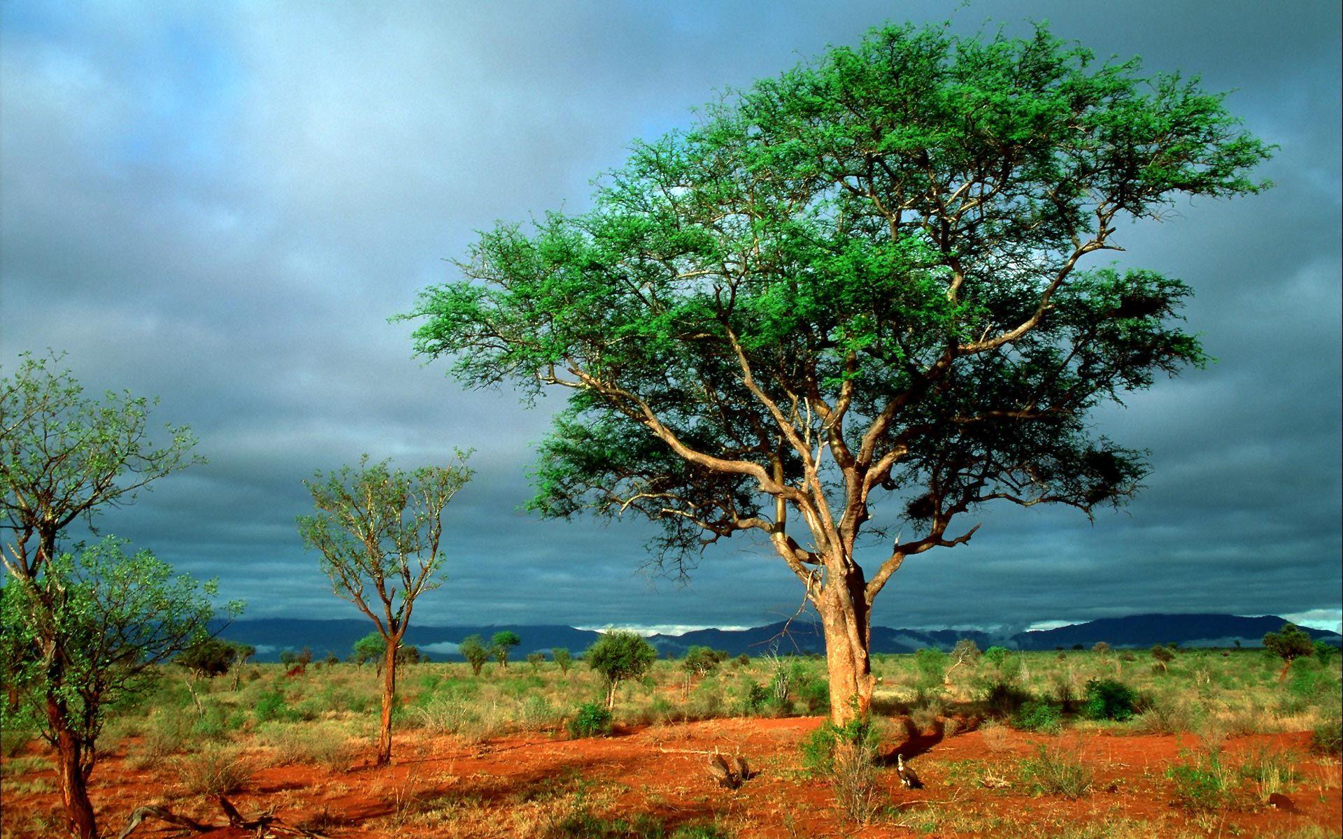South Africa - Kruger