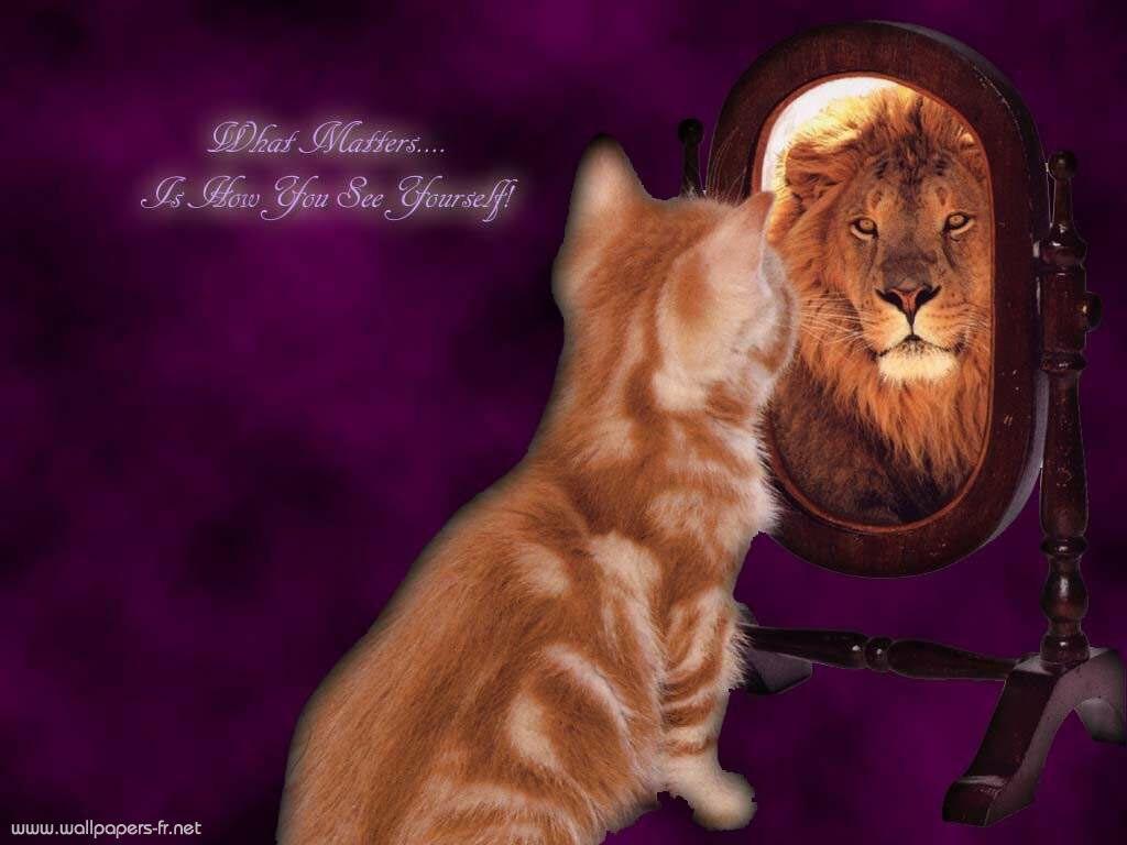 Fonds d ecran chat for Reflet dans le miroir