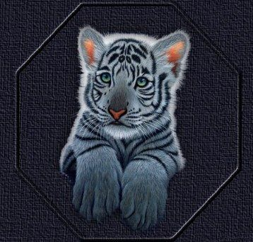 image dessin bébé tigre