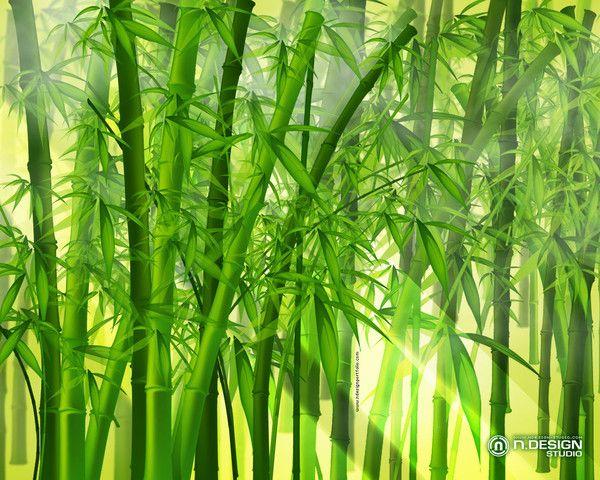 Fond D Ecran Bambou