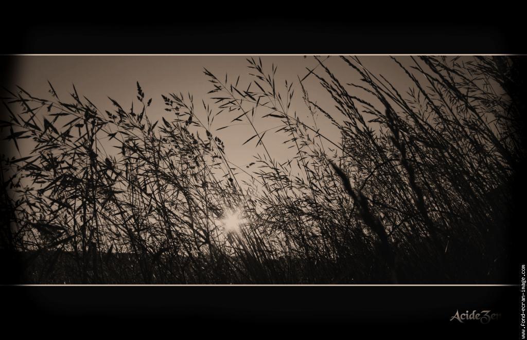 Noir et Jaune Fond D'écran Fond D'écran Paysage Noir