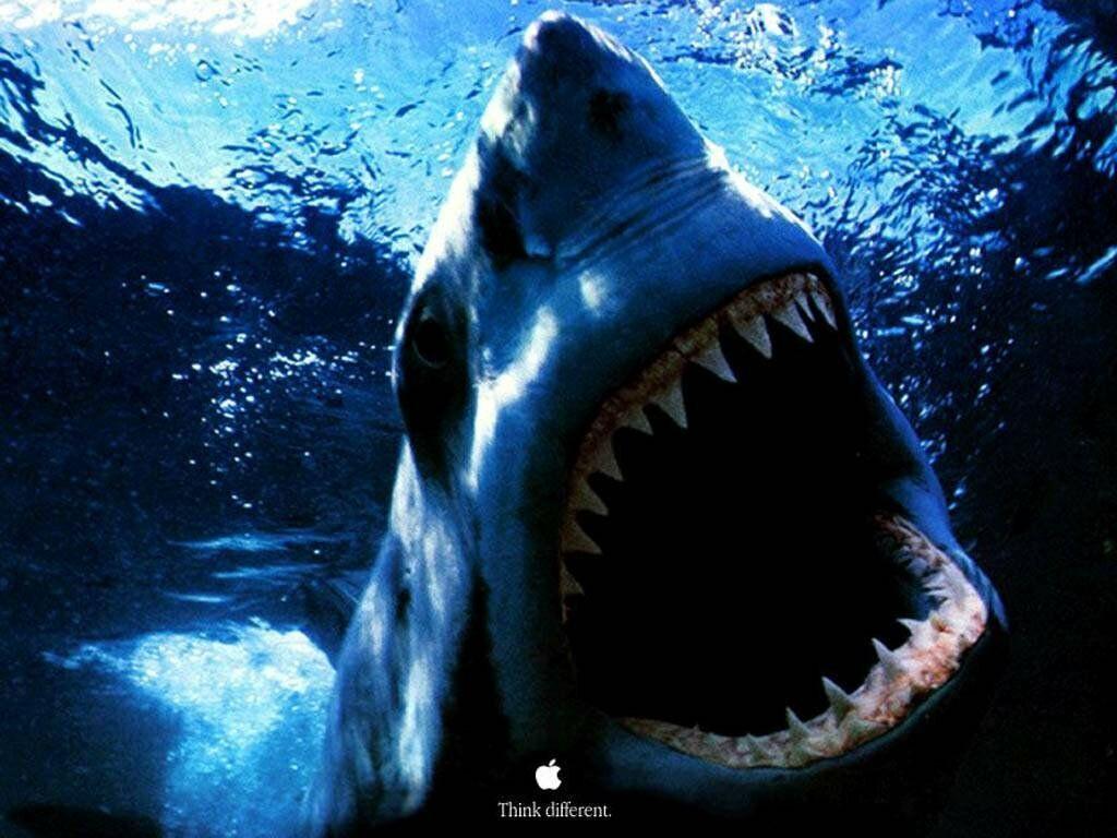 Самки акул не нуждаются в спаривании для самовоспроизведения.