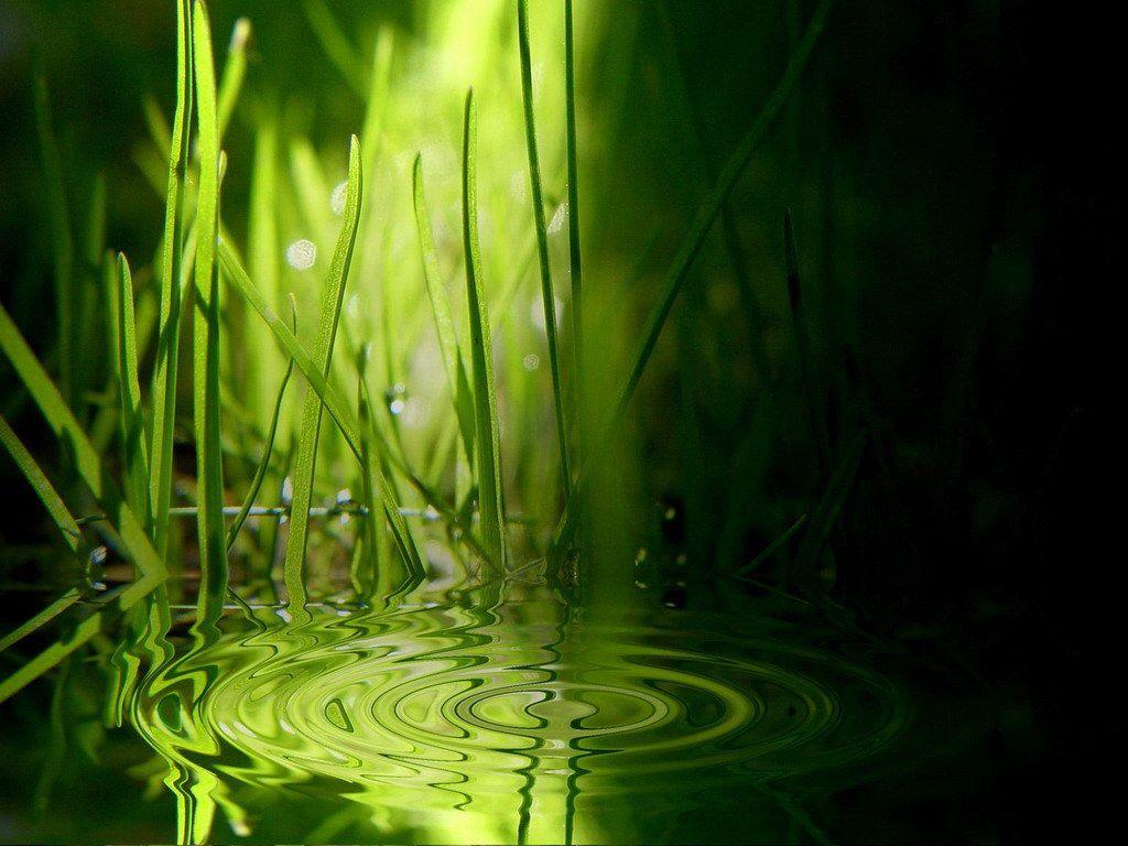 Fond d 39 cran nature for Photo ecran zen