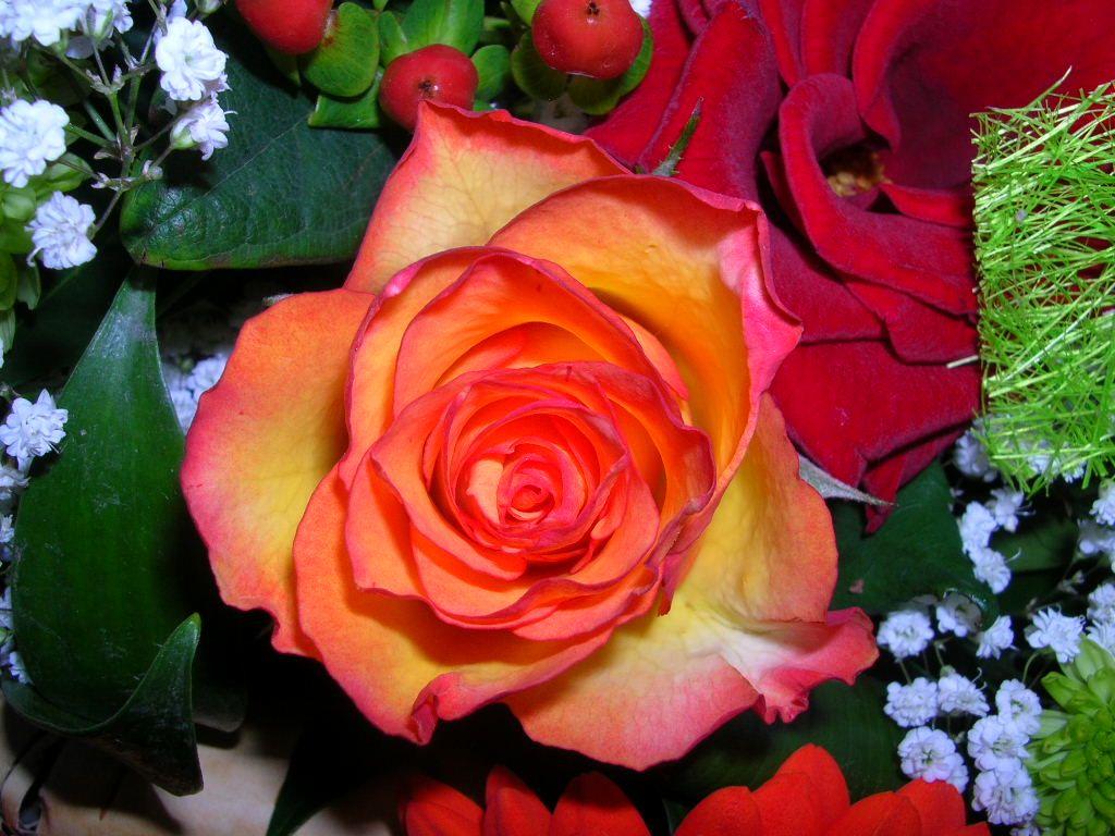 fond décran bouquet de fleurs