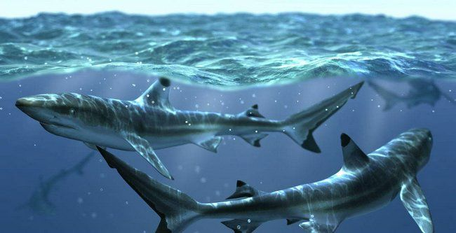 requins 3D