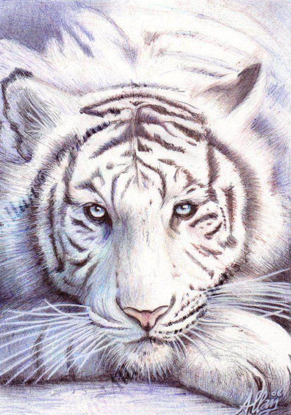 Dessin tigre - Image dessin tigre ...