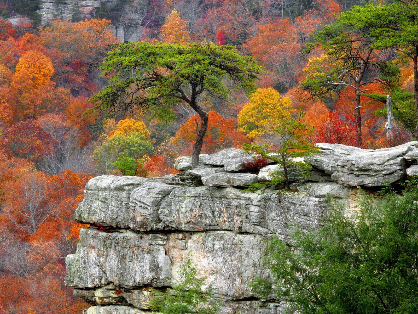 Fonds d'écran paysage d'automne
