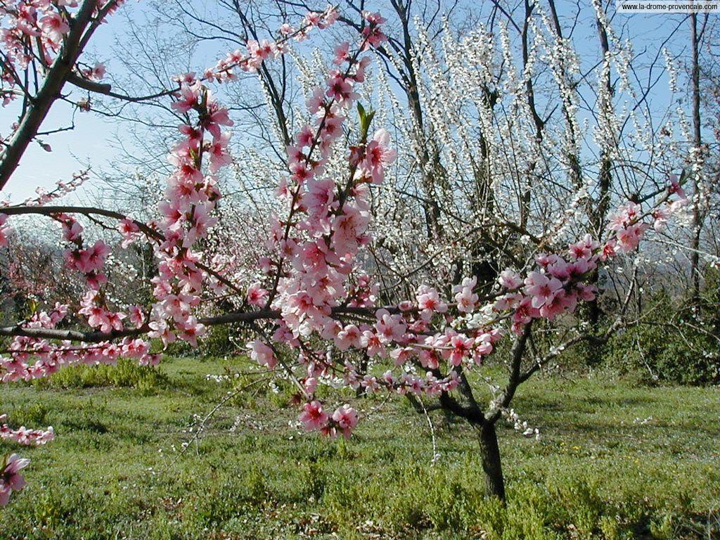 Fond d écran paysage printemps