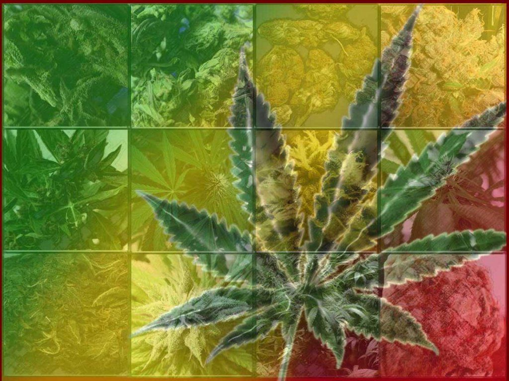 fond d'écran cannabis