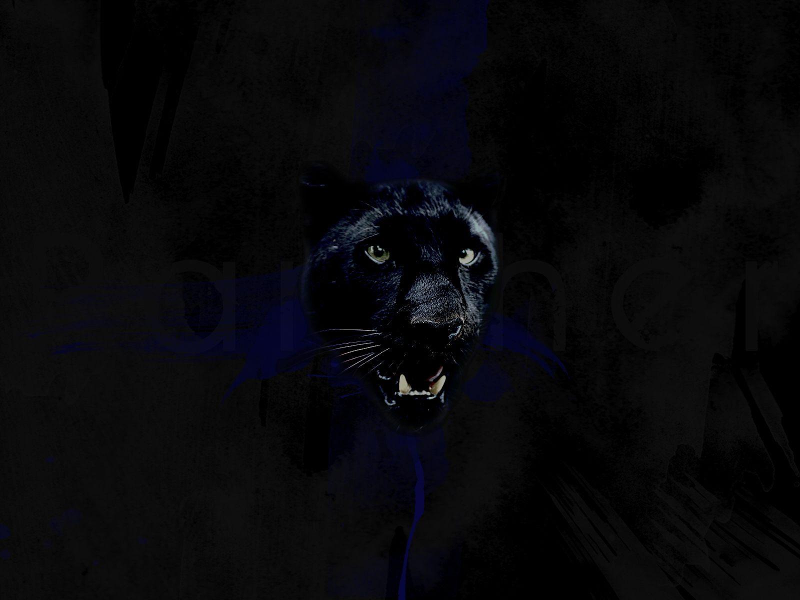 Noir et Jaune Fond D'écran Fond D'écran Panthere Noire