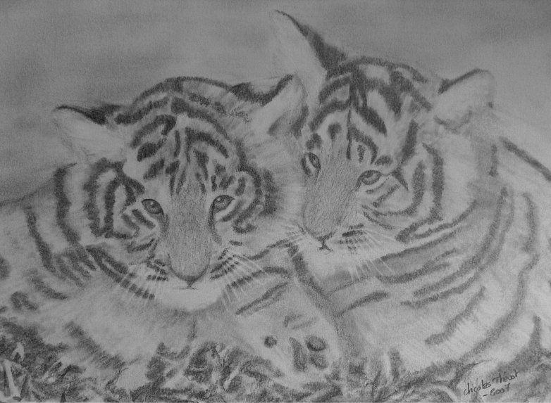 Image dessin b b tigre - Image dessin tigre ...