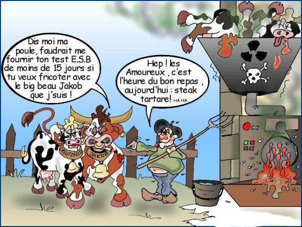 image vache