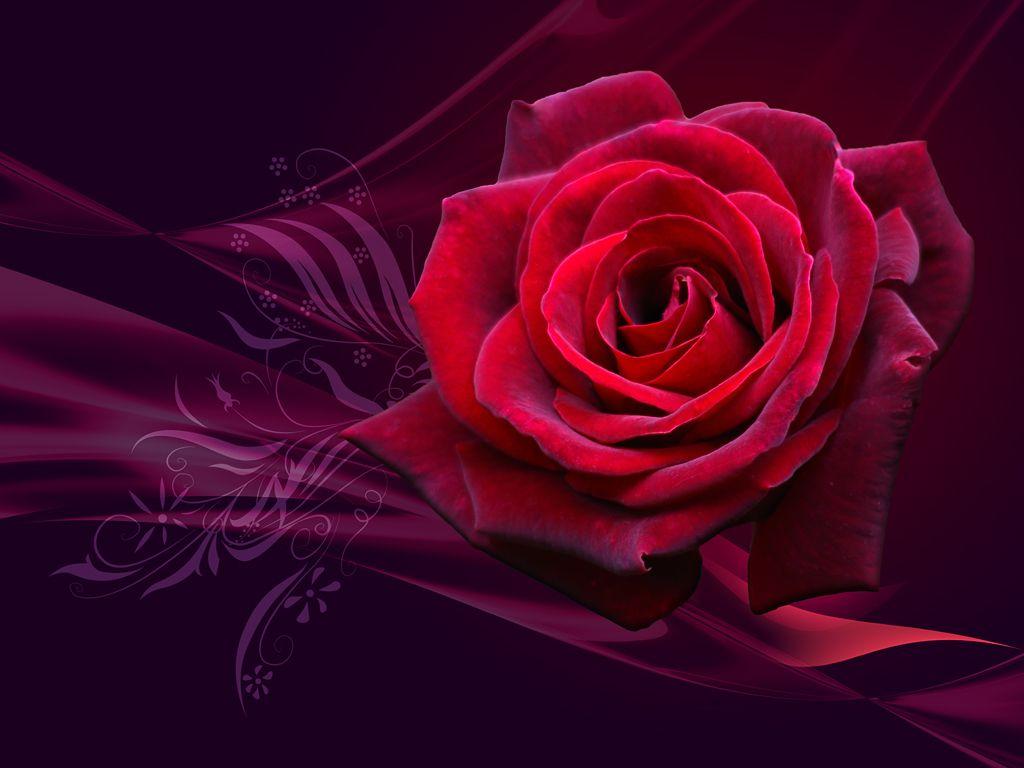 Fonds d ecran fleurs for Fond ecran rose