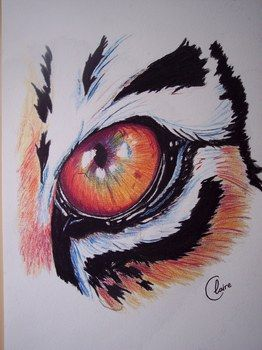 dessin oeil de tigre