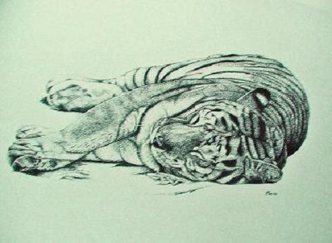 dessin tigre