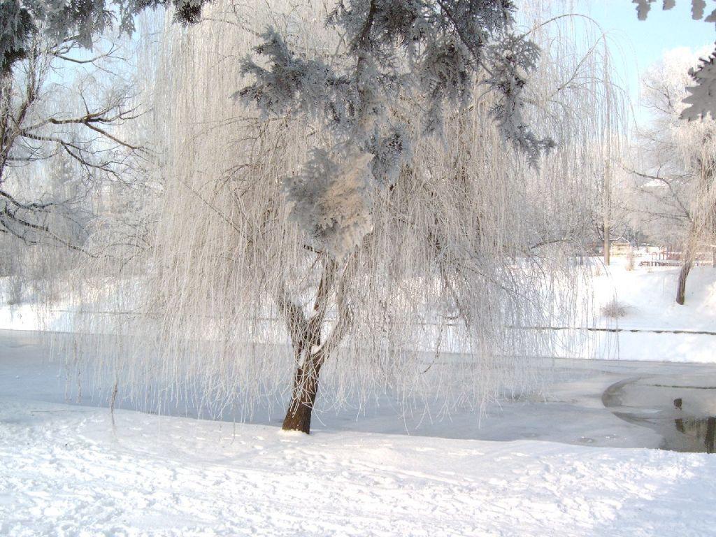 Fonds d ecran paysages d hiver for Fond ecran gratuit pour ordinateur hiver